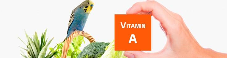 A vitamīns